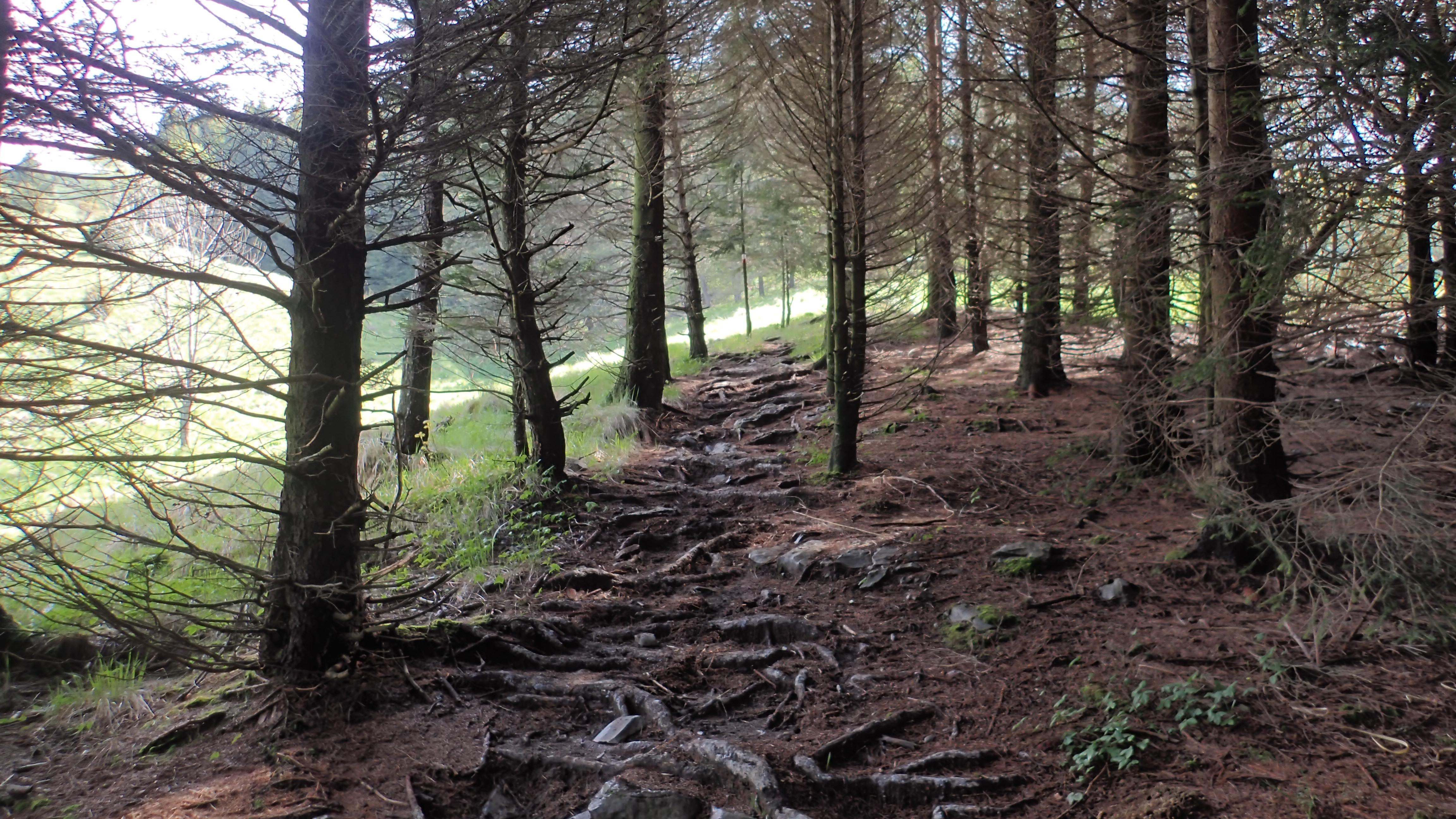 monte joanaz trail